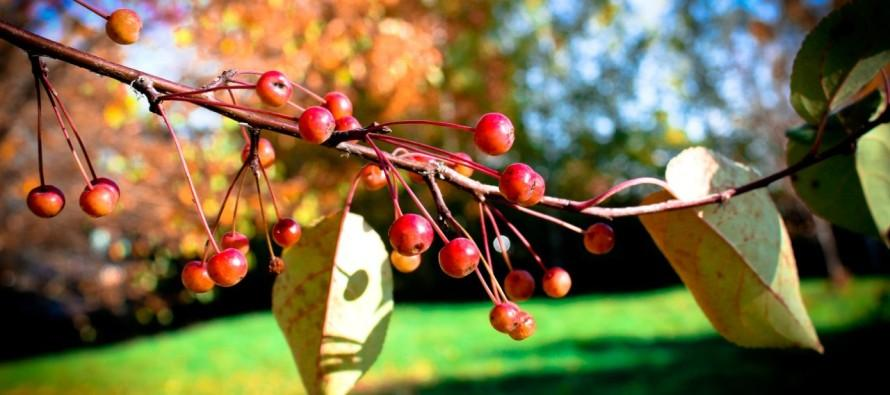 Бесплатные садовые участки — это не миф