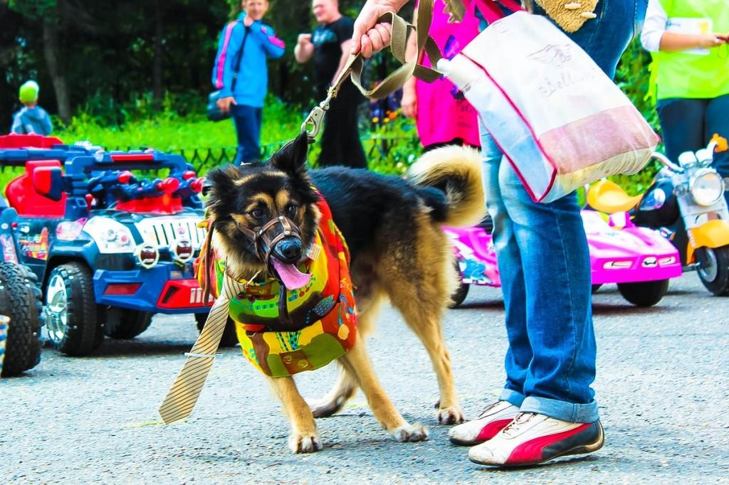Выставка беспородных собак в Бийске