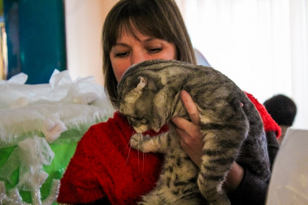 Выставка кошек и котят «Зимние забавы»
