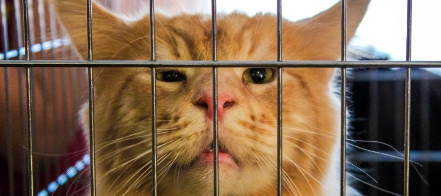 Выставка кошек «Зимние забавы»