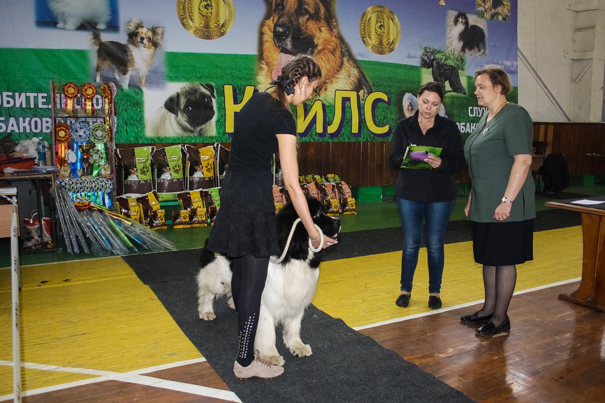 Выставка собак. 23 мая 2015 г.