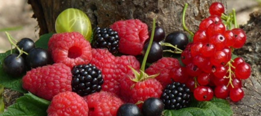 В Алтайском крае завершают прием заявок на господдержку для создания многолетних плодовых и ягодных кустарниковых насаждений