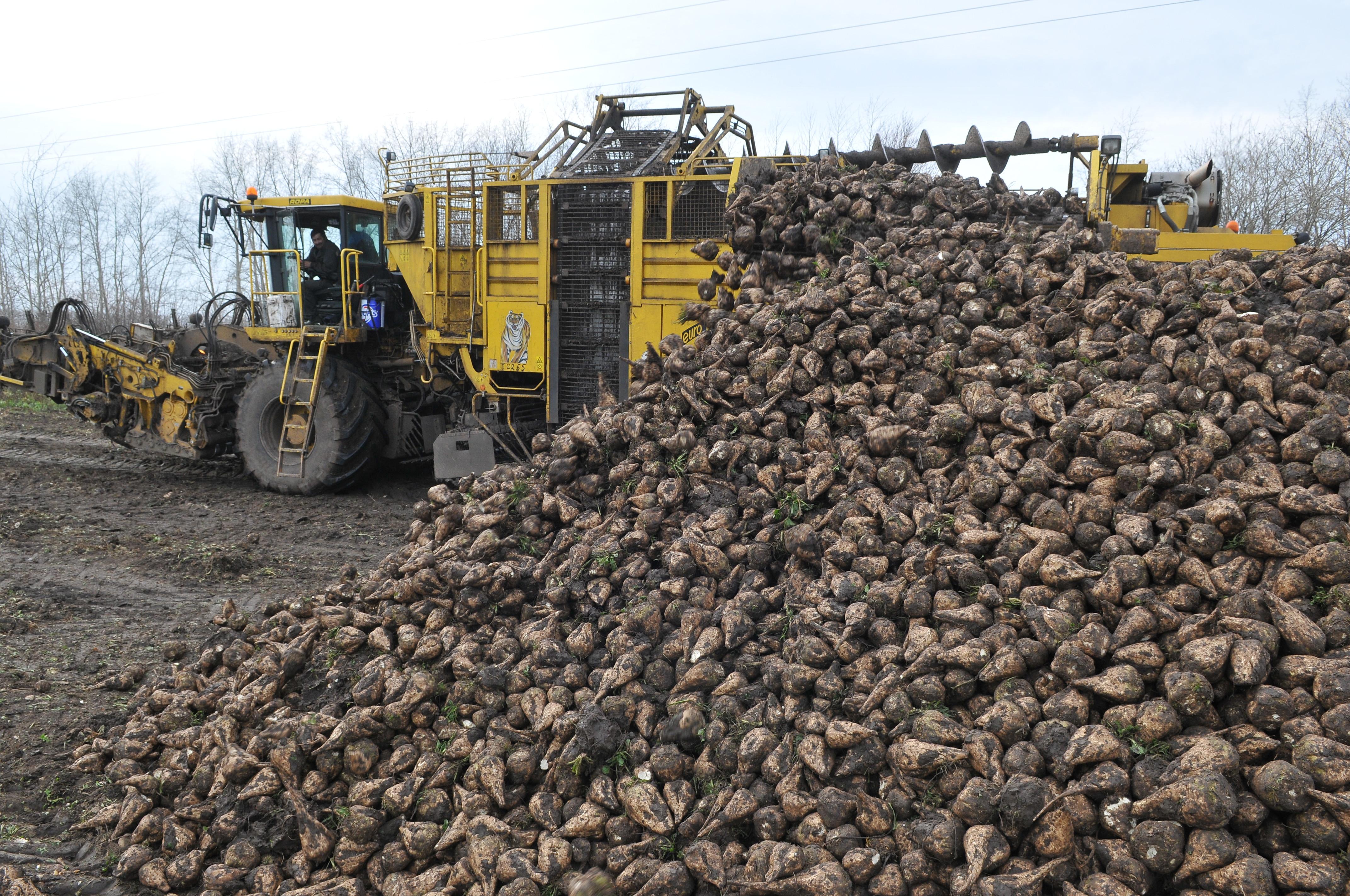 Урожай сладкой свёклы вБашкирии превысил 895 тыс. тонн