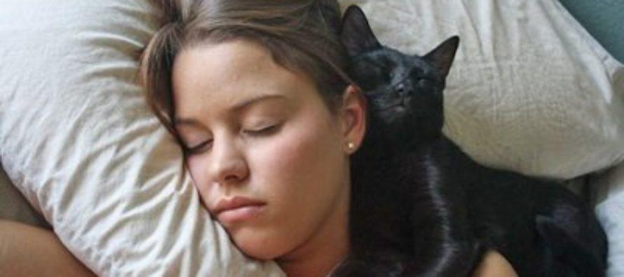 Ученые снова доказали, что кошки способны лечить людей