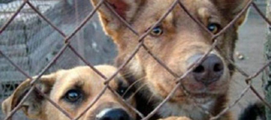 Администрация Бийска принимает заявки на отлов безнадзорных животных