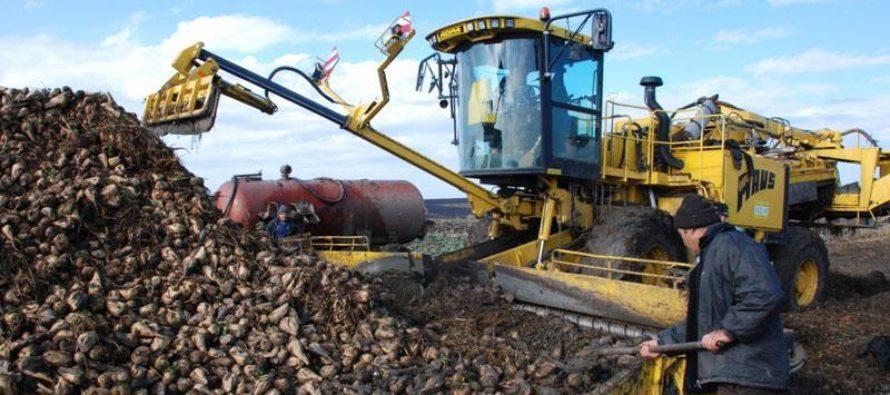 Сбор сахарной свеклы в Алтайском крае достиг рекордных результатов