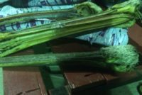 В Алтайском крае осудили контрабандиста, который перевозил через границу головы пеликанов