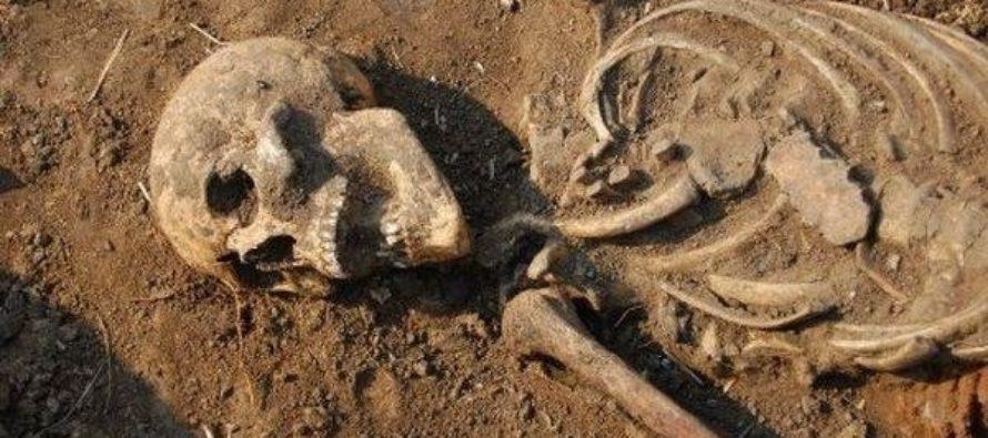 При строительных работ на берегу Бия обнаружены человеческие останки