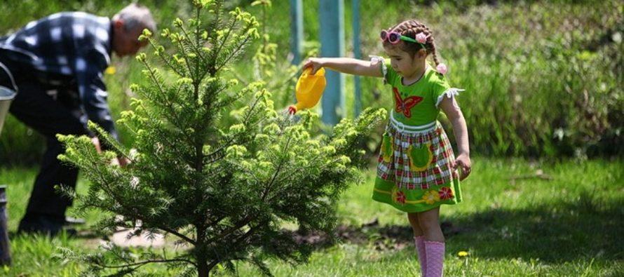 В Алтайском крае высадили более 500 гектаров леса