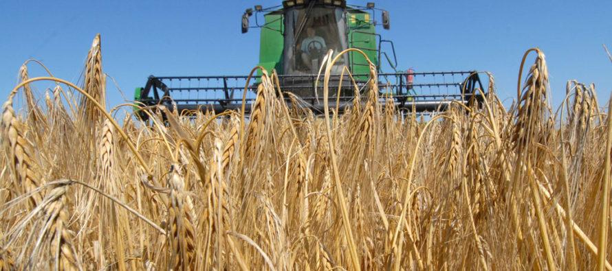 В Немецком национальном районе лидером по уборке зерновых стало хозяйство Александра Майера