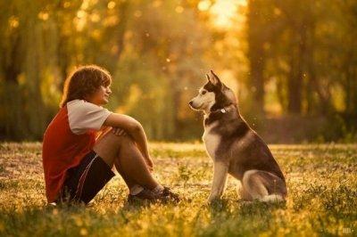 Ученые обнаружили еще одну «человеческую» способность собак