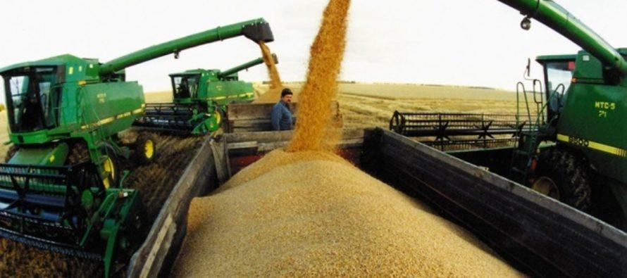В Алтайском крае растет производство зерна