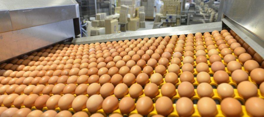 В Алтайском крае растет производство яиц