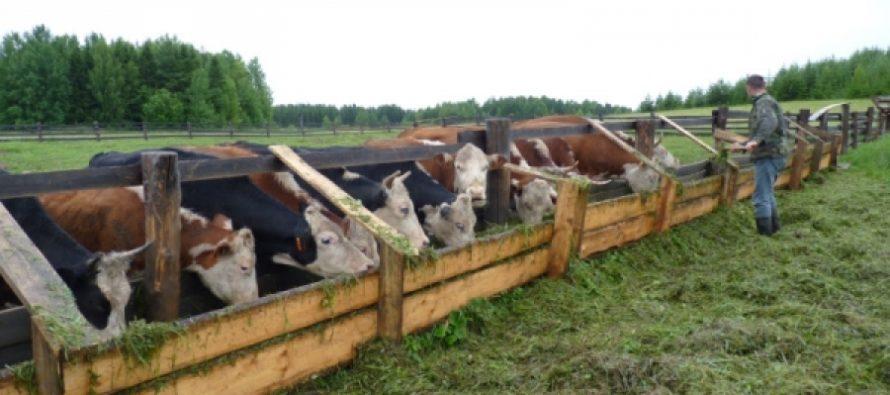 Алтайский край — лидер по количеству фермерских хозяйств в Сибири