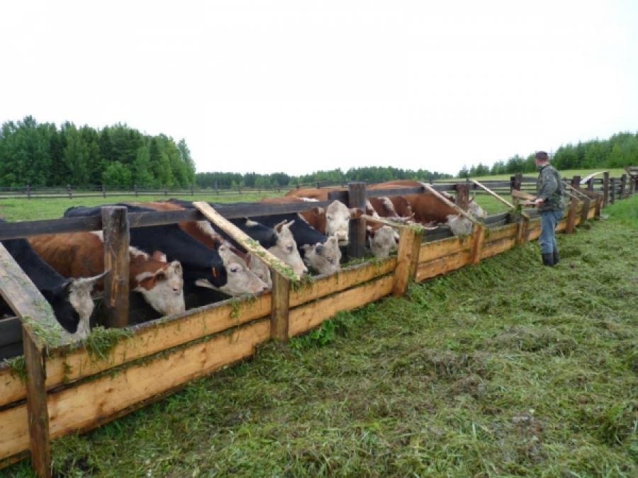 Отчет фермерское хозяйство даже