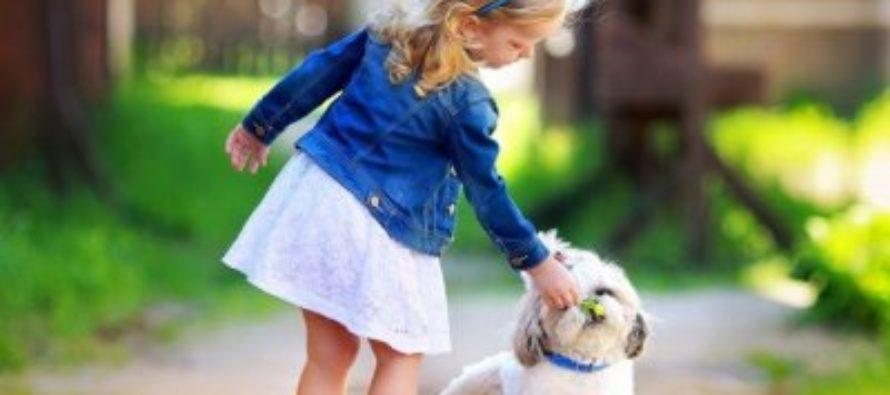 Ученые узнали, как собака помогает ребенку справиться со стрессом
