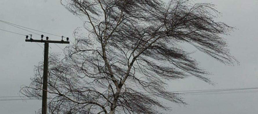 В Алтайском крае объявили штормовое предупреждение из-за метелей и сильного ветра