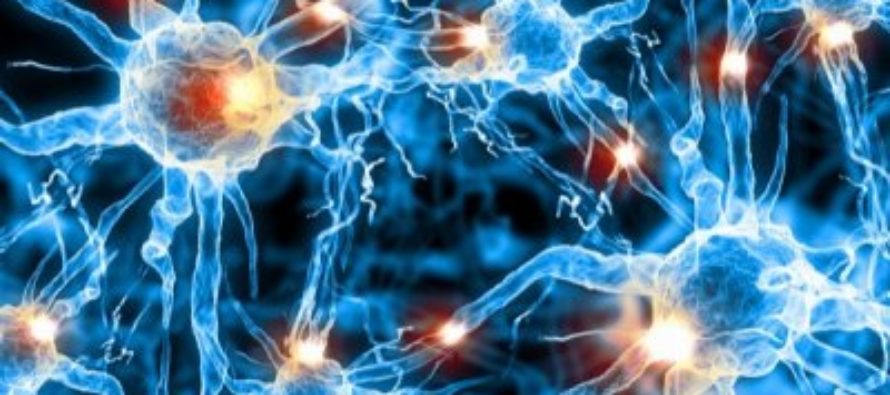 Ученые открыли новый вид памяти в мозге человека
