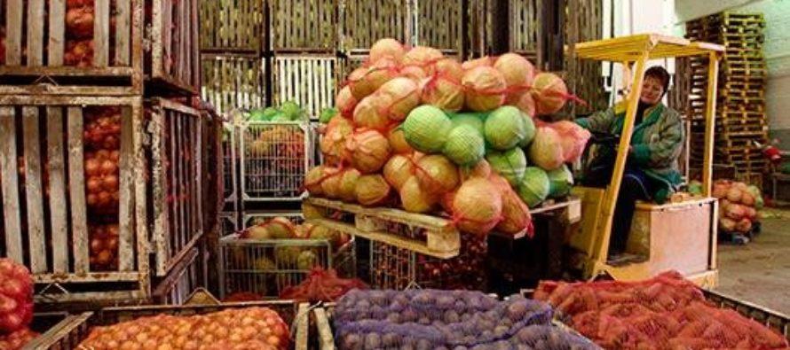 Производство сельхозпродукции в Алтайском крае за 11 месяцев возросло более чем на 11%