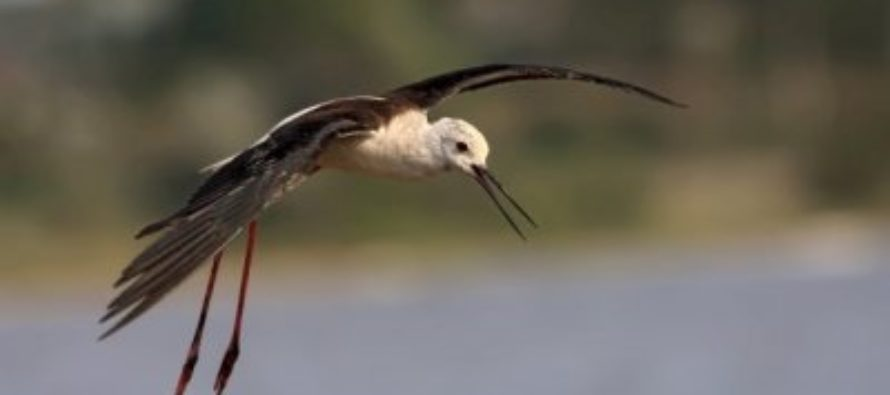 В Красную книгу добавили более 740 новых видов птиц