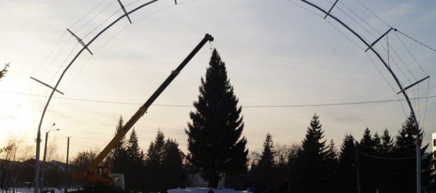 На Петровском бульваре установили главную городскую ёлку