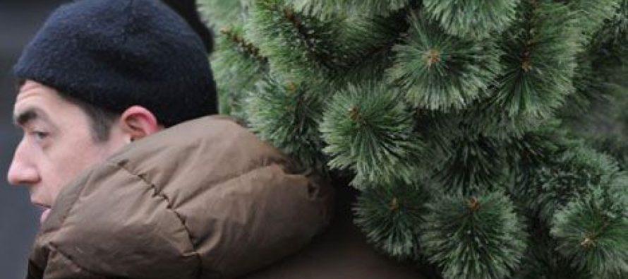 В Сибири власти украли ёлку из усадьбы пенсионерки, чтобы украсить площадь к Новому году