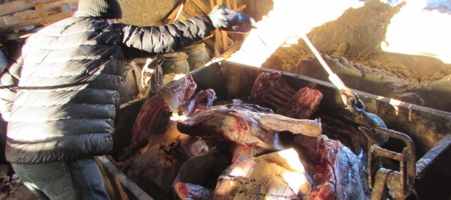 Казахи везли американское мясо в Алтайский край