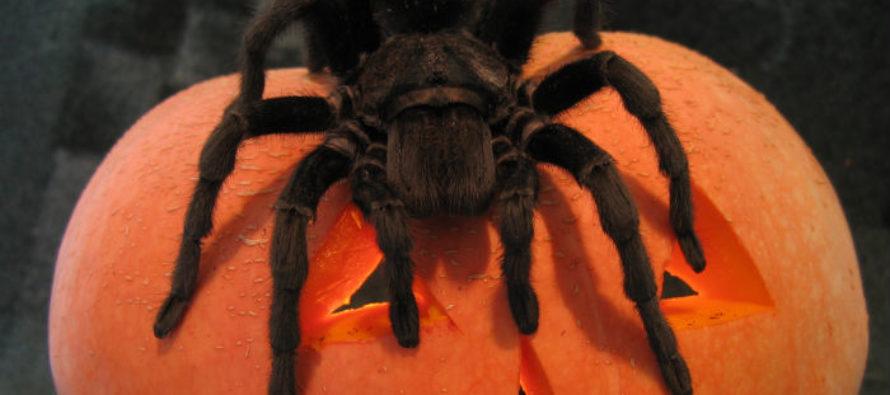 В барнаульском музее «Город» открыли выставку «Удивительный мир пауков»