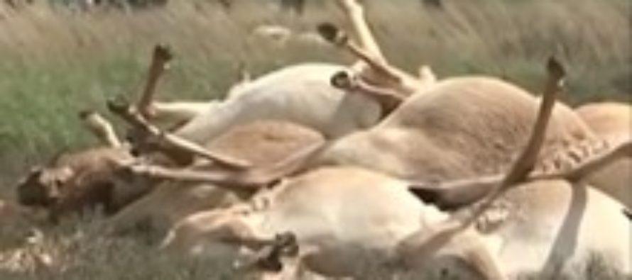 Сельхознадзор перекрыл границу с Монголией из-за эпидемий