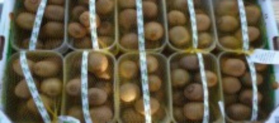 Алтайский сельхознадзор победил коробку киви