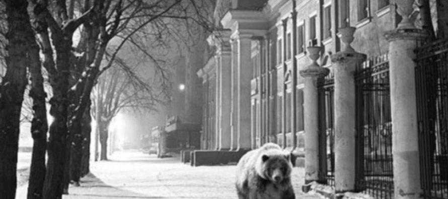 Легенду о Деде Медведе визуализируют в Барнауле