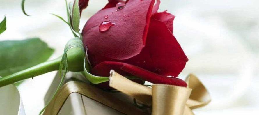Какие цветы подарить любимой девушке?