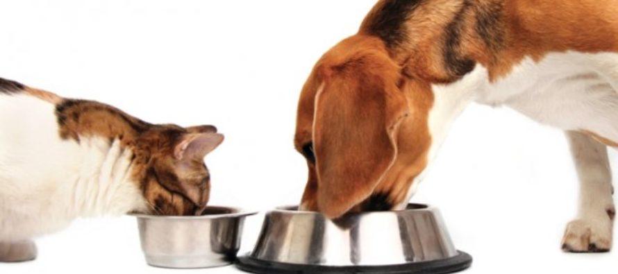 Виды кормов для собак и кошек