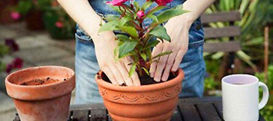 Как правильно ухаживать за цветами и растениями?