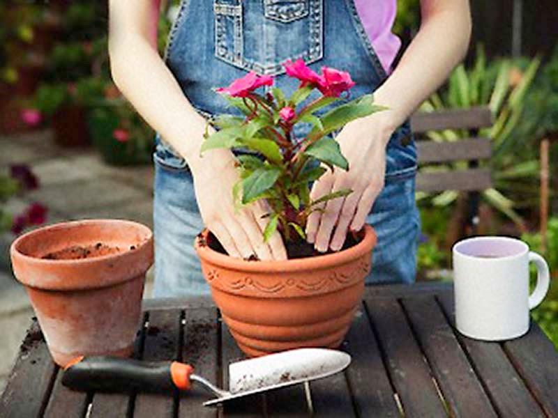 Какие и как лучше посадить цветы в