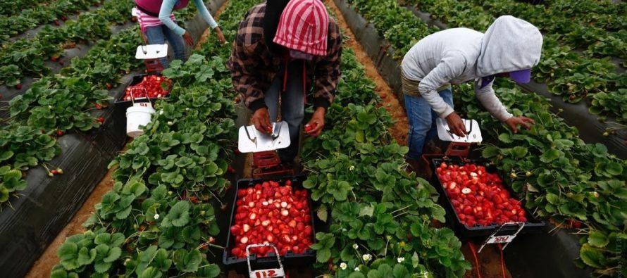 Работа в сельском хозяйстве в Польше и все, что нужно об этом знать