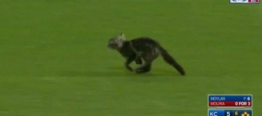 Котенок, выбежавший на бейсбольное поле, повеселил зрителей в США