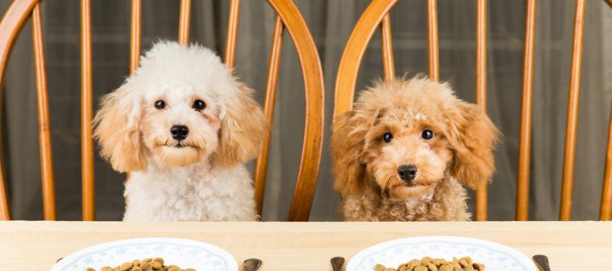 Какой корм лучше всего подходит для собаки?