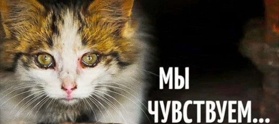 Общество защиты животных «Преданность» просит срочной помощи!