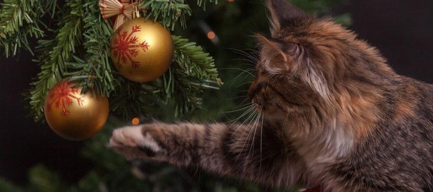 Где в Барнауле можно купить новогоднюю ель. Список адресов