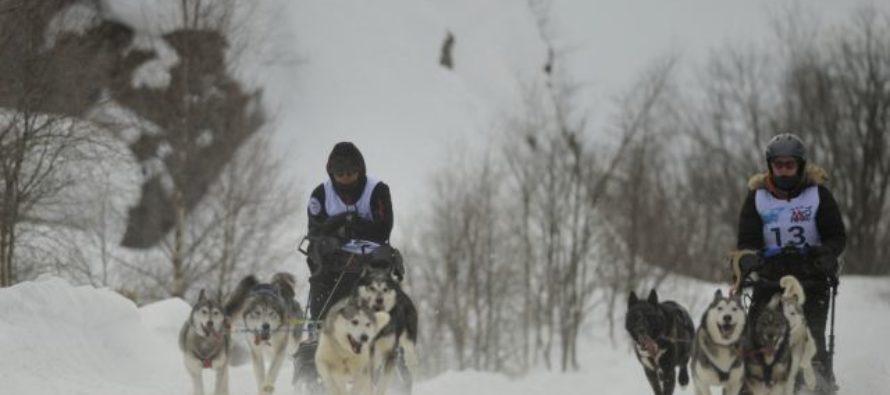 В Алтайском крае состоятся гонки на собачьих упряжках «По седому Алтаю»