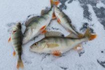 Алтайские рыбаки стали призерами Чемпионата России по ловле на мормышку