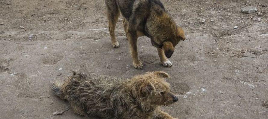 В Барнауле снова массово травили собак