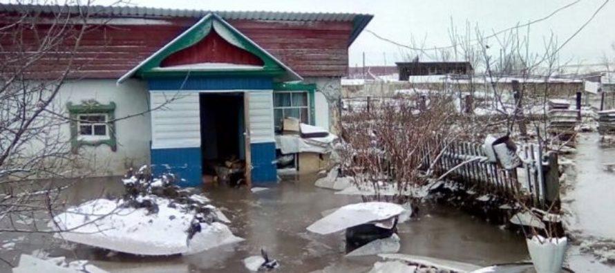 Из подтопленных районов Алтайского края эвакуировали 3 тысячи голов скота
