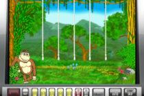 Crazy monkey — возможность делать ставки и выигрывать