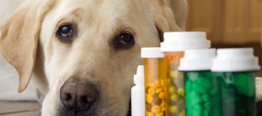 Какие витамины нужны для взрослой собаки?