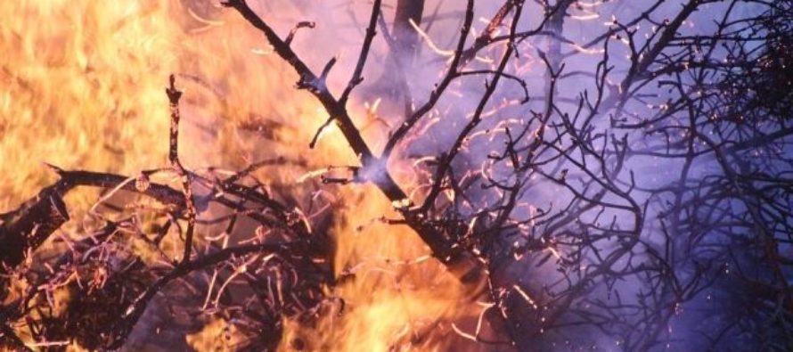 В Ребрихинском районе местные жители устроили пожар в лесу