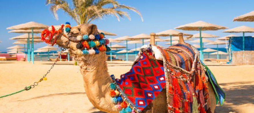 Отдых в Египте: Шарм эль шейх из Витебска