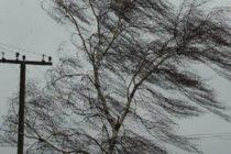 В Барнауле сильный ветер сорвал крыши и повалил деревья