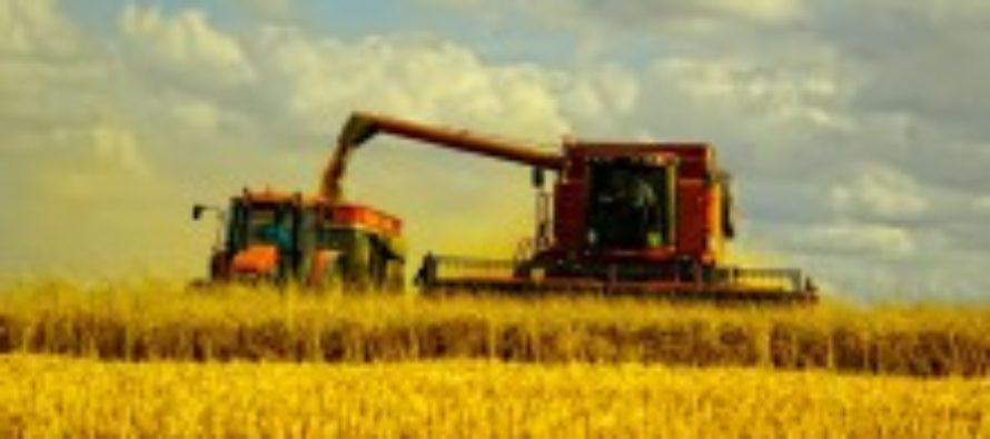 Аграрии Алтайского края намолотили более 3,7 миллиона тонн зерна